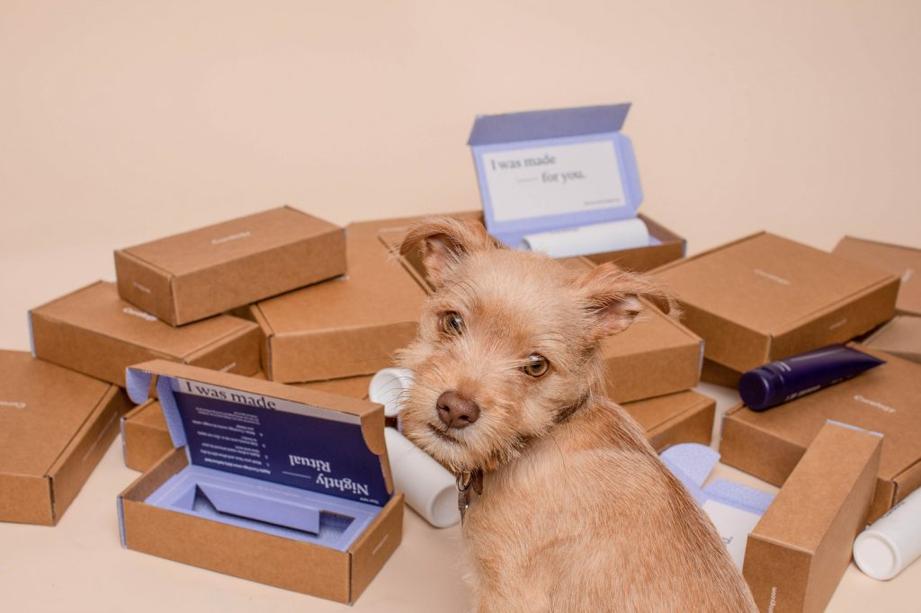 dog looking at dozens of parcels
