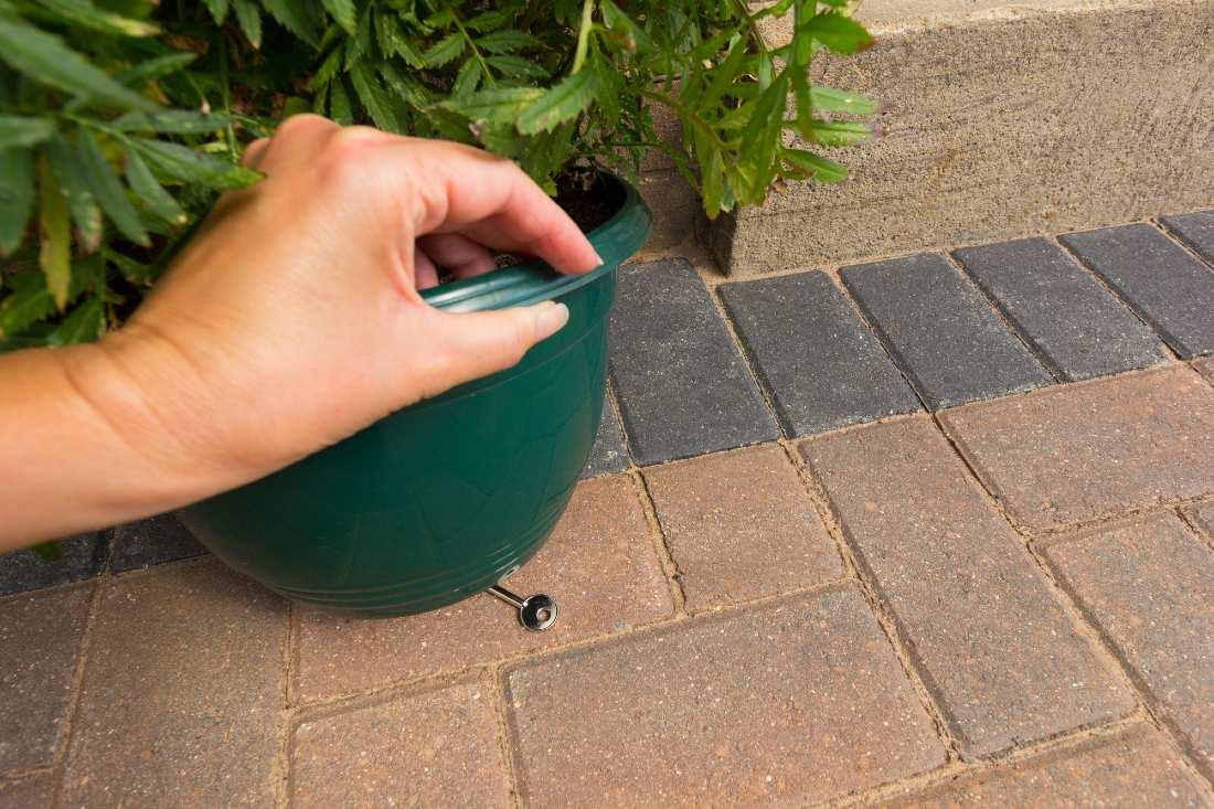 hiding the keys underneath a green pot plant