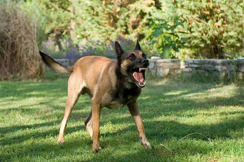 angry dog barking in the garden